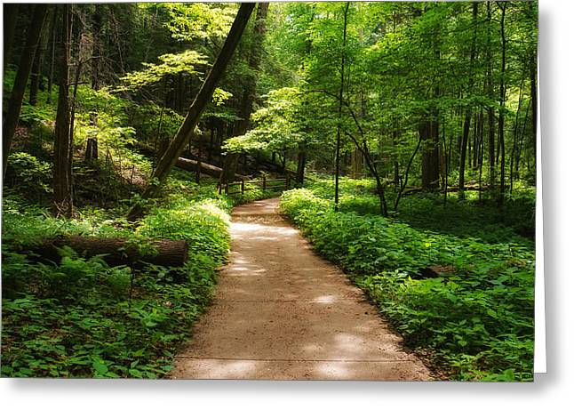 The Hills Greeting Cards - Dappled Forest Magic Greeting Card by Rachel Cohen