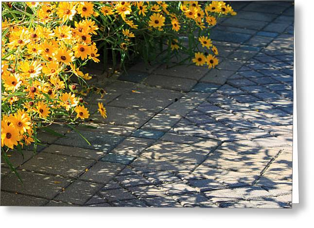 Dappled Light II Greeting Card by Suzanne Gaff