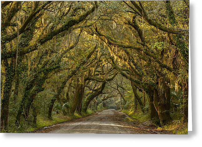 Dirt Road Greeting Cards - Dappled Morning Greeting Card by Mike Lang