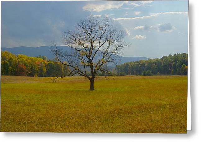 Tennessee Historic Site Greeting Cards - Dare to Stand Alone Greeting Card by Michael Peychich