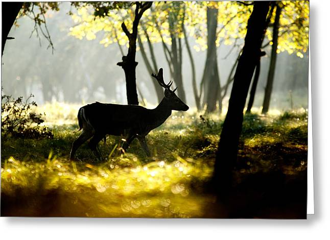 Dark Deer In Illuminated Forest Greeting Card by Roeselien Raimond