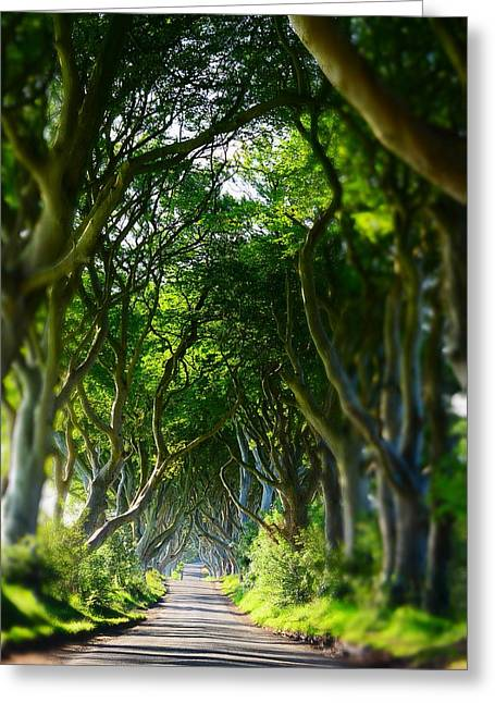 The Dark Hedges Greeting Cards - Dark Hegdes Greeting Card by Mark Hinds