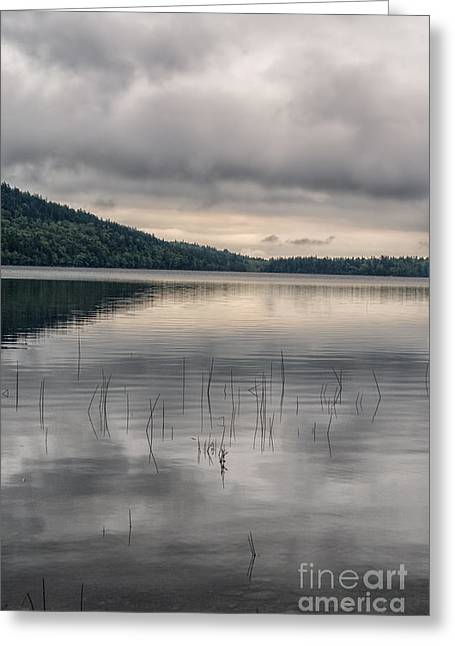 Reflections In River Greeting Cards - Dark lake Greeting Card by Patricia Hofmeester