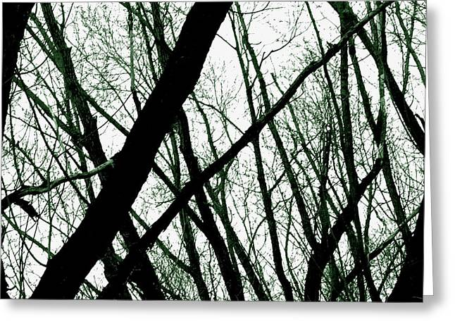 Subtle Colors Photographs Greeting Cards - Dark Limbs Greeting Card by Steven Milner