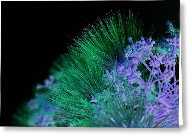Dark Mimosa Greeting Card by James Granberry