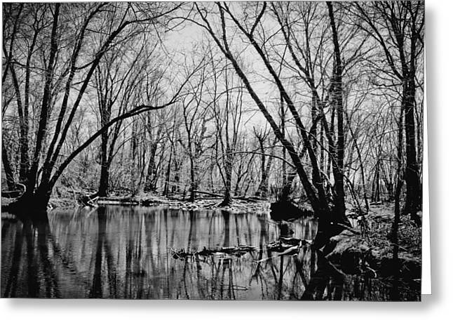 Dark Reflections Greeting Card by Colleen Kammerer