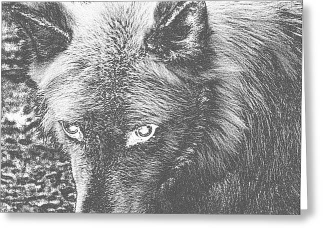 Wolf From The Forest Greeting Cards - Darkside Wolf Greeting Card by Debra     Vatalaro