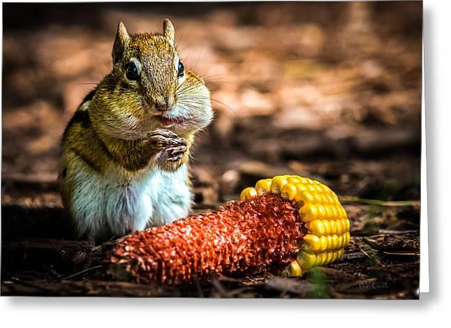 Darn Good Corn Greeting Card by Bob Orsillo