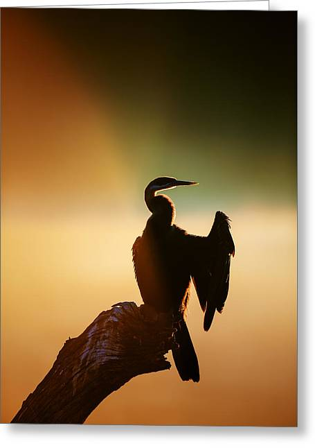 Spreads Greeting Cards - Darter Bird with misty sunrise Greeting Card by Johan Swanepoel