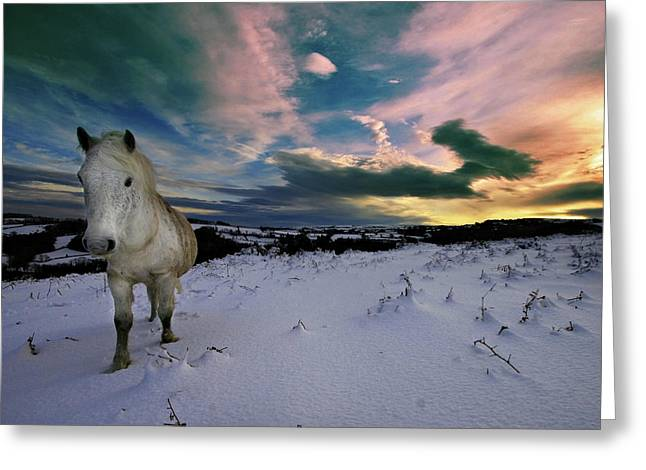 Runner Greeting Cards - Dartmoor pony walking in snow Greeting Card by Mark Stokes