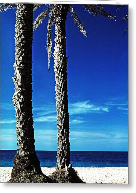 North Shore Greeting Cards - Date Palms Sunset Beach Greeting Card by Thomas R Fletcher