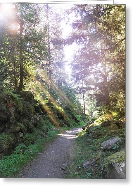 Swiss Photographs Greeting Cards - Davos Fluelatal Path In The Forest Greeting Card by Leone M Jennarelli