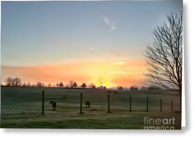 The Horse Greeting Cards - Dawns Early Light Greeting Card by Kerri Farley