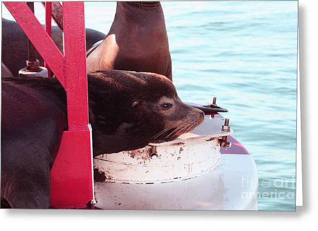 Best Sellers -  - California Sea Lions Greeting Cards - Day Dreaming Greeting Card by Tommy Anderson
