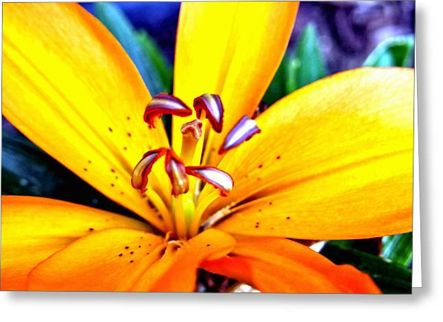 Day Lilly Greeting Cards - Day Lilly Greeting Card by Amy McDaniel