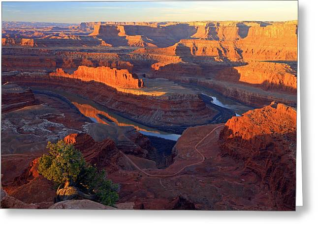Pinion Greeting Cards - Daybreak at Dead Horse Point. Greeting Card by Johnny Adolphson