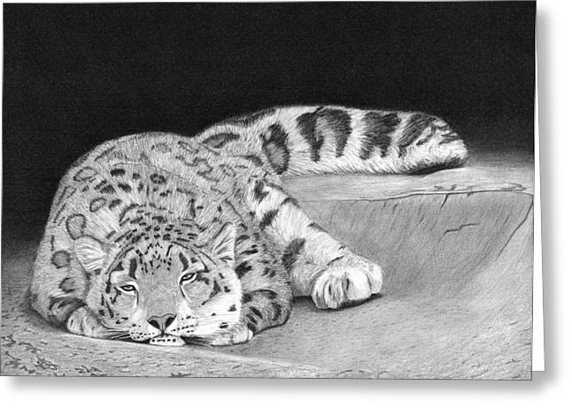 Leopard Drawings Greeting Cards - Daydreamer Greeting Card by Heather Ward