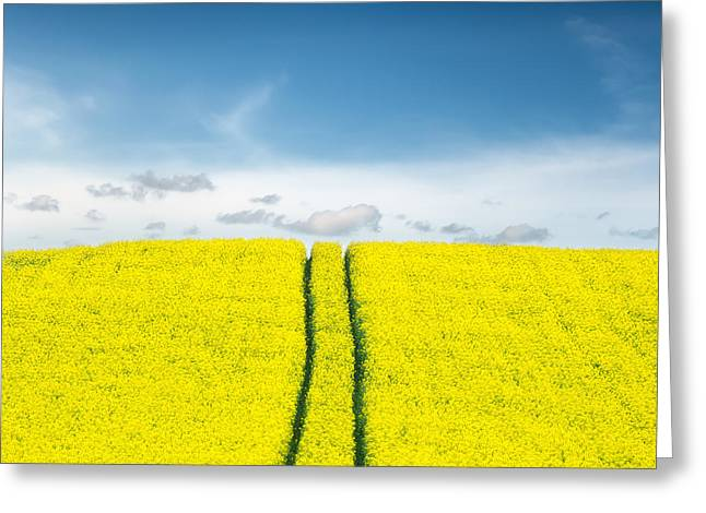 Yellow Greeting Cards - Daydreams Greeting Card by Ian David Soar