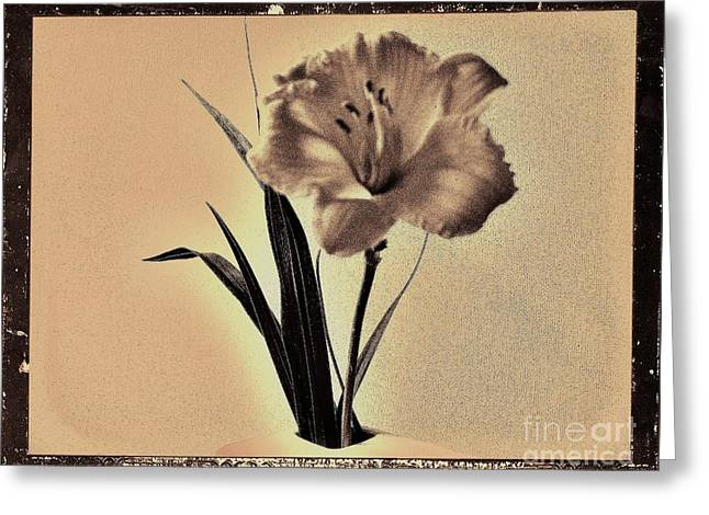 Brown Tones Digital Greeting Cards - Daylily of Old Greeting Card by Marsha Heiken