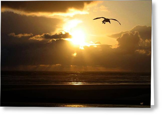 Sand Bar Greeting Cards - Dazzling Dusk Greeting Card by Will Borden