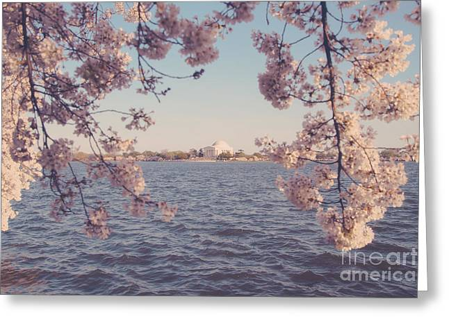 Cherry Blossom Festival Greeting Cards - DC Spring Greeting Card by Emily Enz
