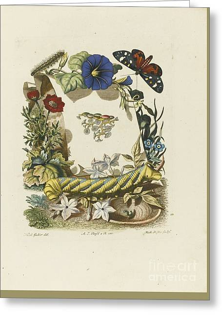 De Natuurlyke Historie Der Insecten Greeting Card by MotionAge Designs