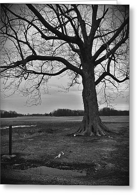 Dead Cat Under Dead Tree In Indiana Greeting Card by Michael L Kimble