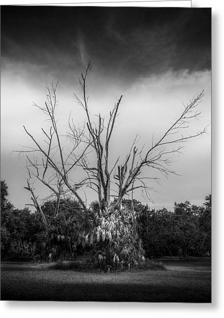 Dead End B/w Greeting Card by Marvin Spates