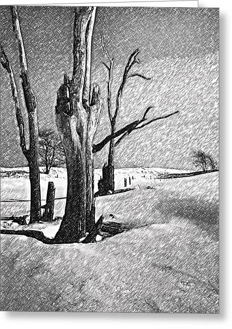 Snow Tree Prints Digital Greeting Cards - Dead of Winter Greeting Card by Steve Harrington