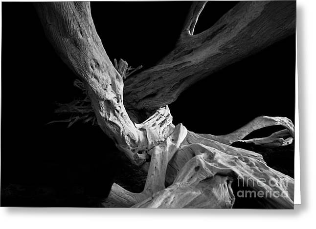 Abstract Nature Greeting Cards - Dead Tree Greeting Card by Dirk Dzimirsky