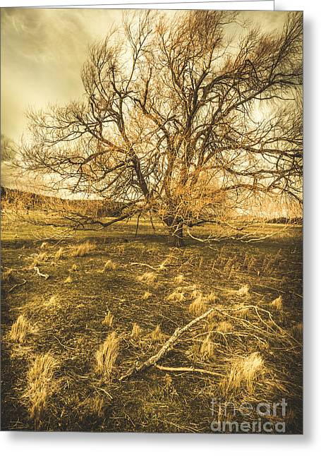 Dead Tree In Seasons Bare Greeting Card by Jorgo Photography - Wall Art Gallery