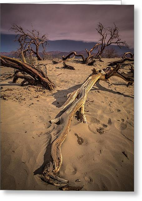 Sand Dunes Pyrography Greeting Cards - Dead Tree in the Sand Greeting Card by Rick Strobaugh