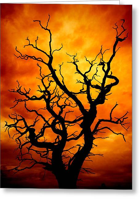 Manipulated Greeting Cards - Dead Tree Greeting Card by Meirion Matthias