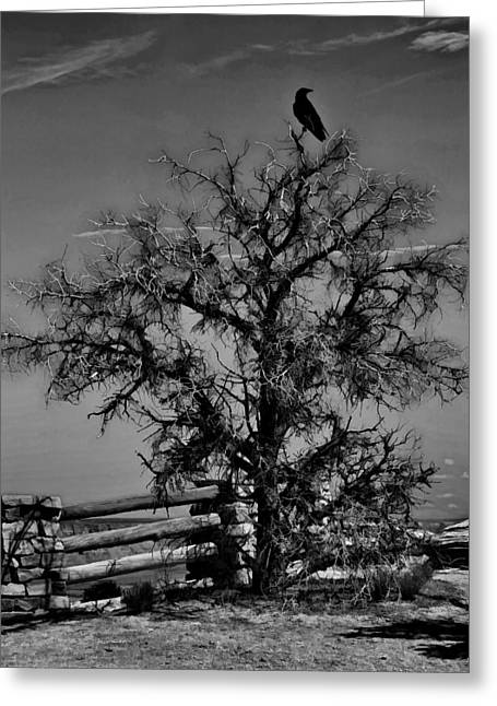 Gnarly Greeting Cards - Dead Tree Sunset B and W W5266 Greeting Card by Wes and Dotty Weber