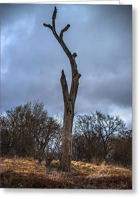 Dead Tree Trunk Greeting Cards - Dead Tree Trunk against Dark Sky Greeting Card by Donald  Erickson