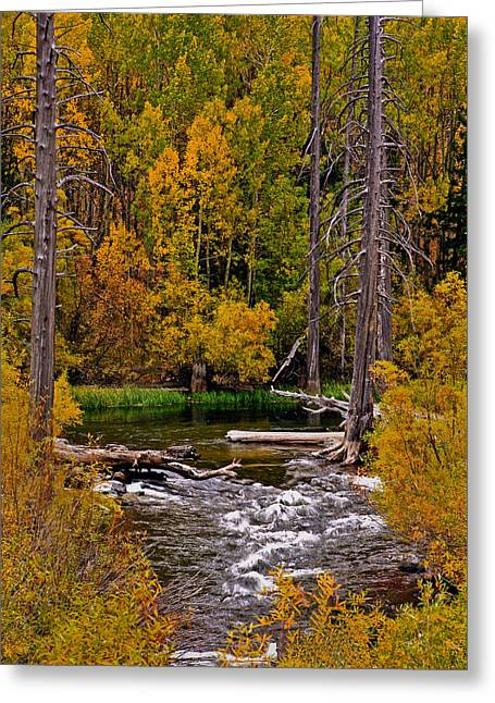 Stream Pyrography Greeting Cards - Dead Trees along Stream Greeting Card by Rick Strobaugh