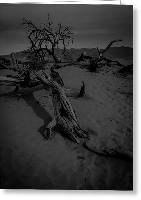 Sand Dunes Pyrography Greeting Cards - Dead Trees on the Dunes BW Greeting Card by Rick Strobaugh