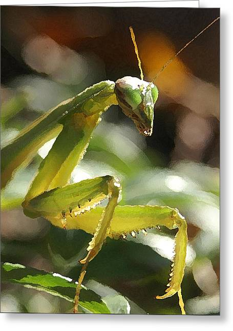 Mantis Greeting Cards - Deadly Stalker Greeting Card by Kenneth Young
