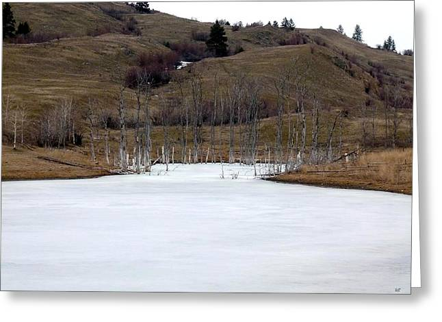 Best Sellers -  - Grazing Snow Greeting Cards - Deadwood Inlet Greeting Card by Will Borden