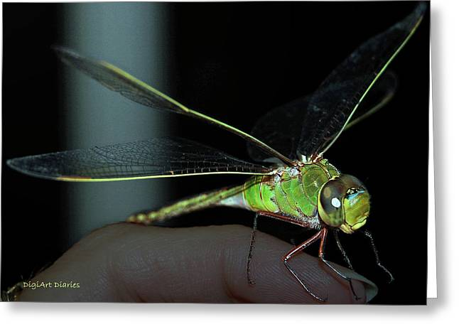 Green Darner Dragonflies Greeting Cards - Dear Dragonfly Greeting Card by DigiArt Diaries by Vicky B Fuller