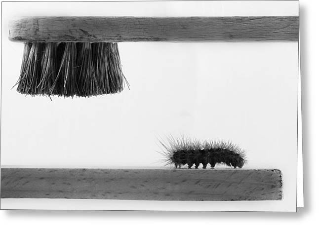 Caterpillar Greeting Cards - ...dear Friend Greeting Card by Stefano Mallus