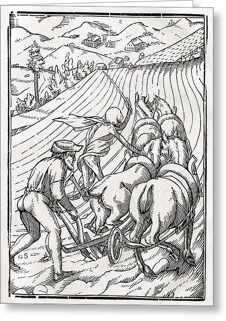 Bale Drawings Greeting Cards - Death Comes For The Farmer Or Greeting Card by Ken Welsh