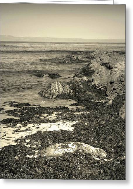 Beach Photography Greeting Cards - Death Is A Daily Occurance On The Waterfront Greeting Card by Joyce Dickens