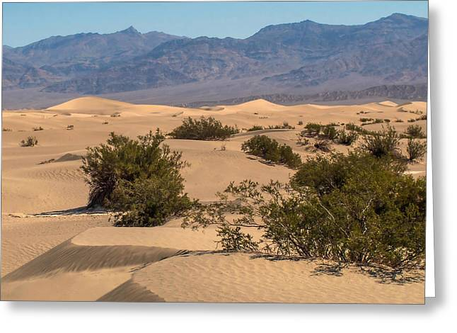 Peaceful Scene Greeting Cards - Death Valley 17 Greeting Card by Ingrid Smith-Johnsen