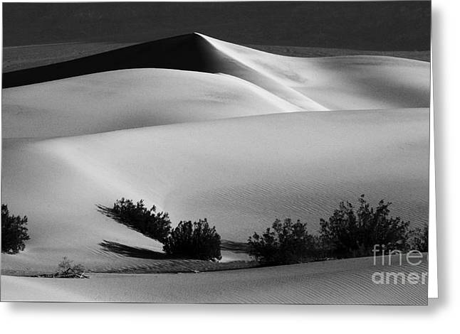 Death Valley California Mesquite Dunes Greeting Card by Bob Christopher