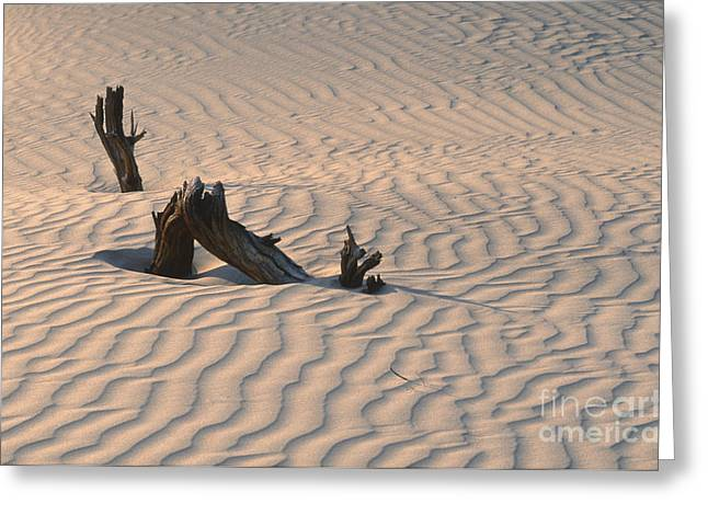 Sand Pattern Greeting Cards - Death Valley Morning Greeting Card by Sandra Bronstein