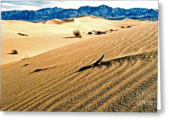Death Valley National Park Greeting Card by Jerome Stumphauzer