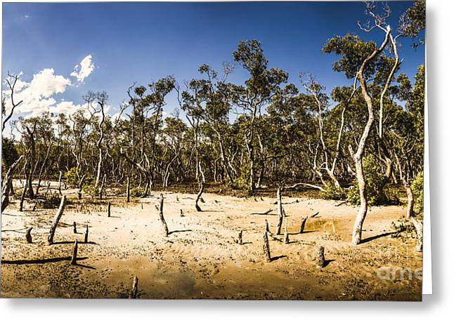 Deception Bay Conservation Park Greeting Card by Jorgo Photography - Wall Art Gallery