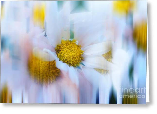 Flower Design Greeting Cards - Decorative Io Greeting Card by SK Pfphotography