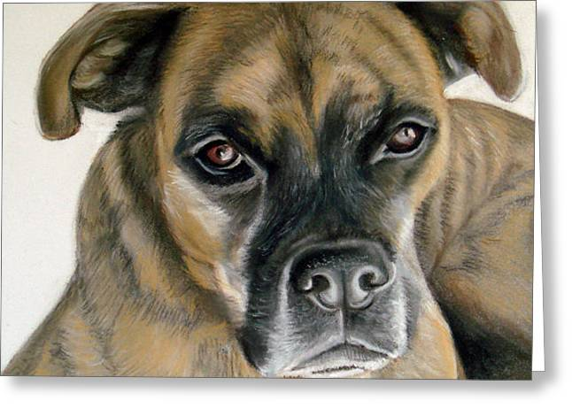Mary Mayes Greeting Cards - Deefer the Boxer Greeting Card by Mary Mayes